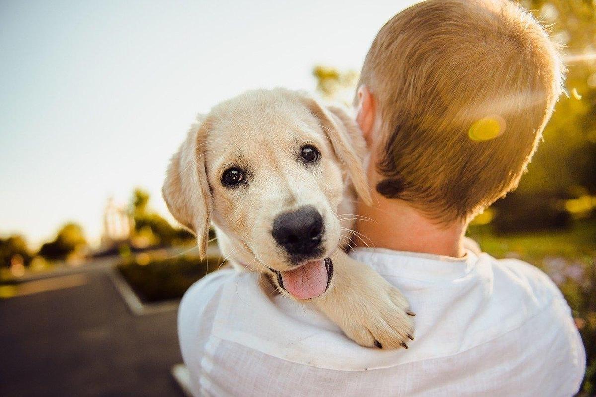保護犬を引き取るには?私が里親になるまでのストーリー