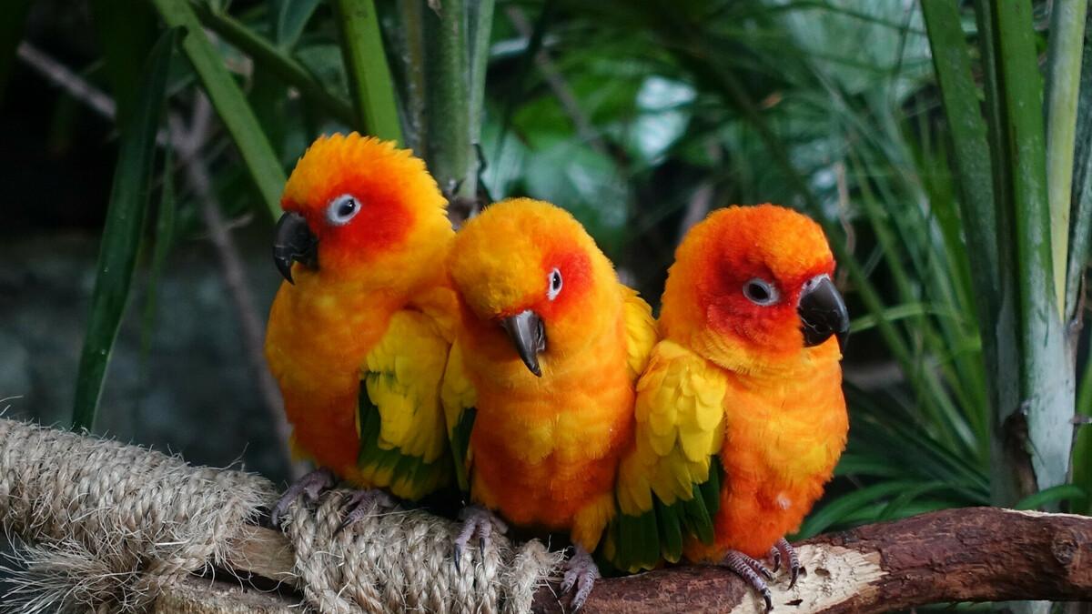 明るい色の鳥