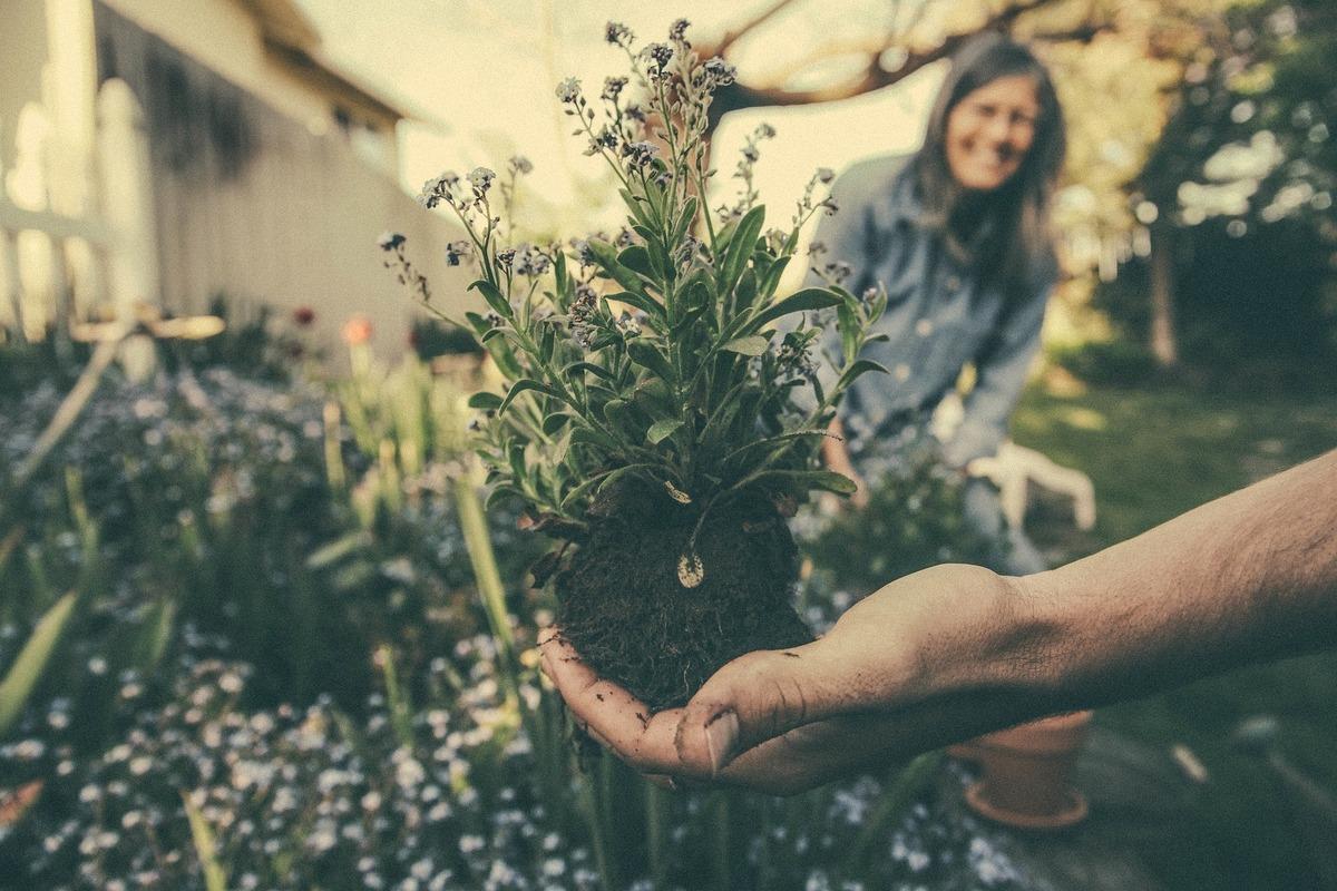 初心者でも安心!家庭菜園で自家製ハーブティーやデトックスウォーターに挑戦