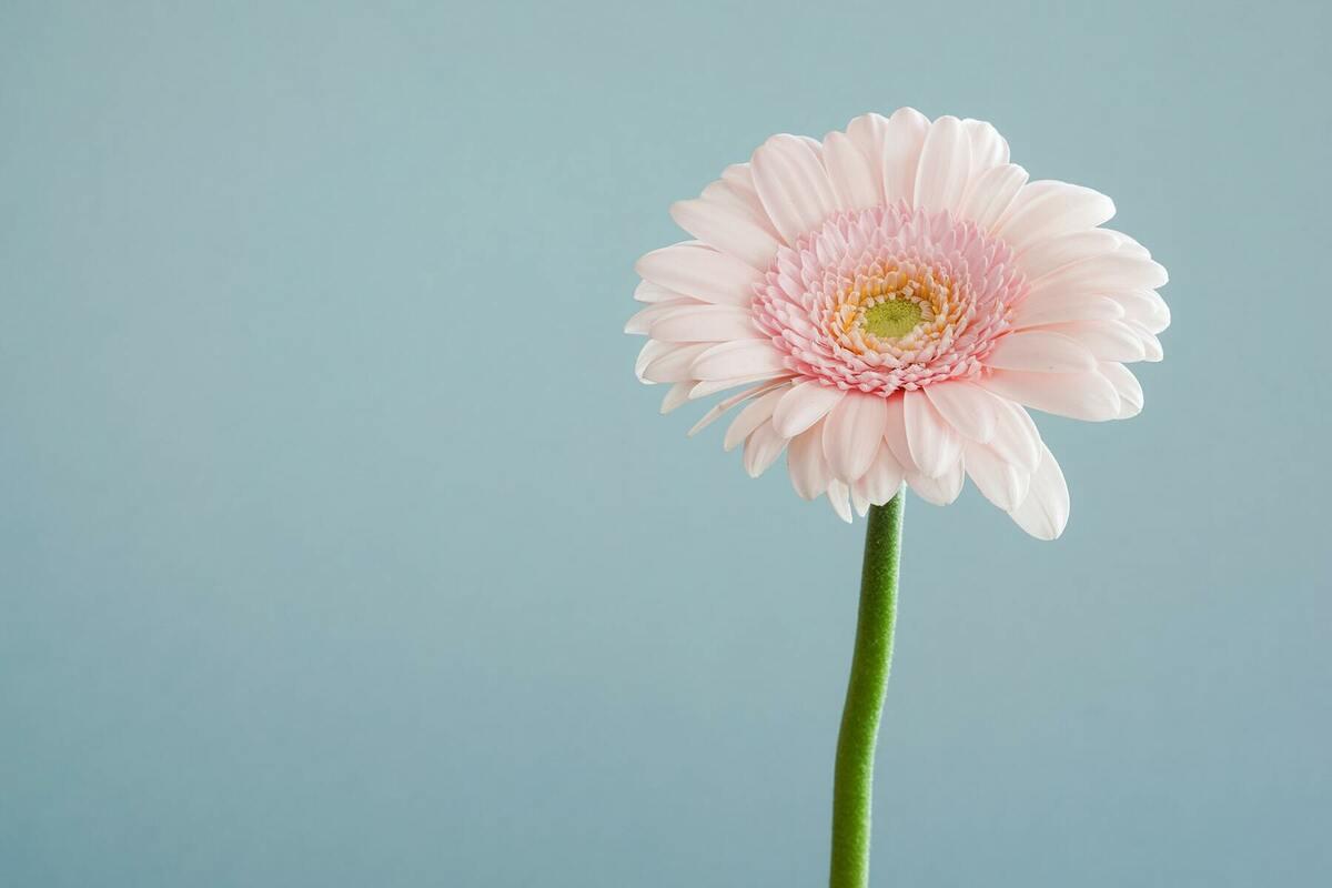 かわいらしい花