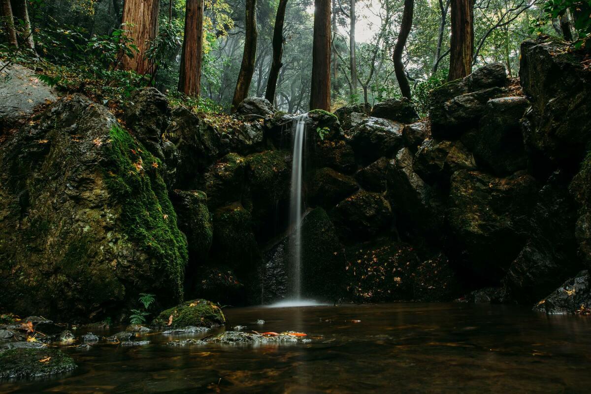 日本の自然