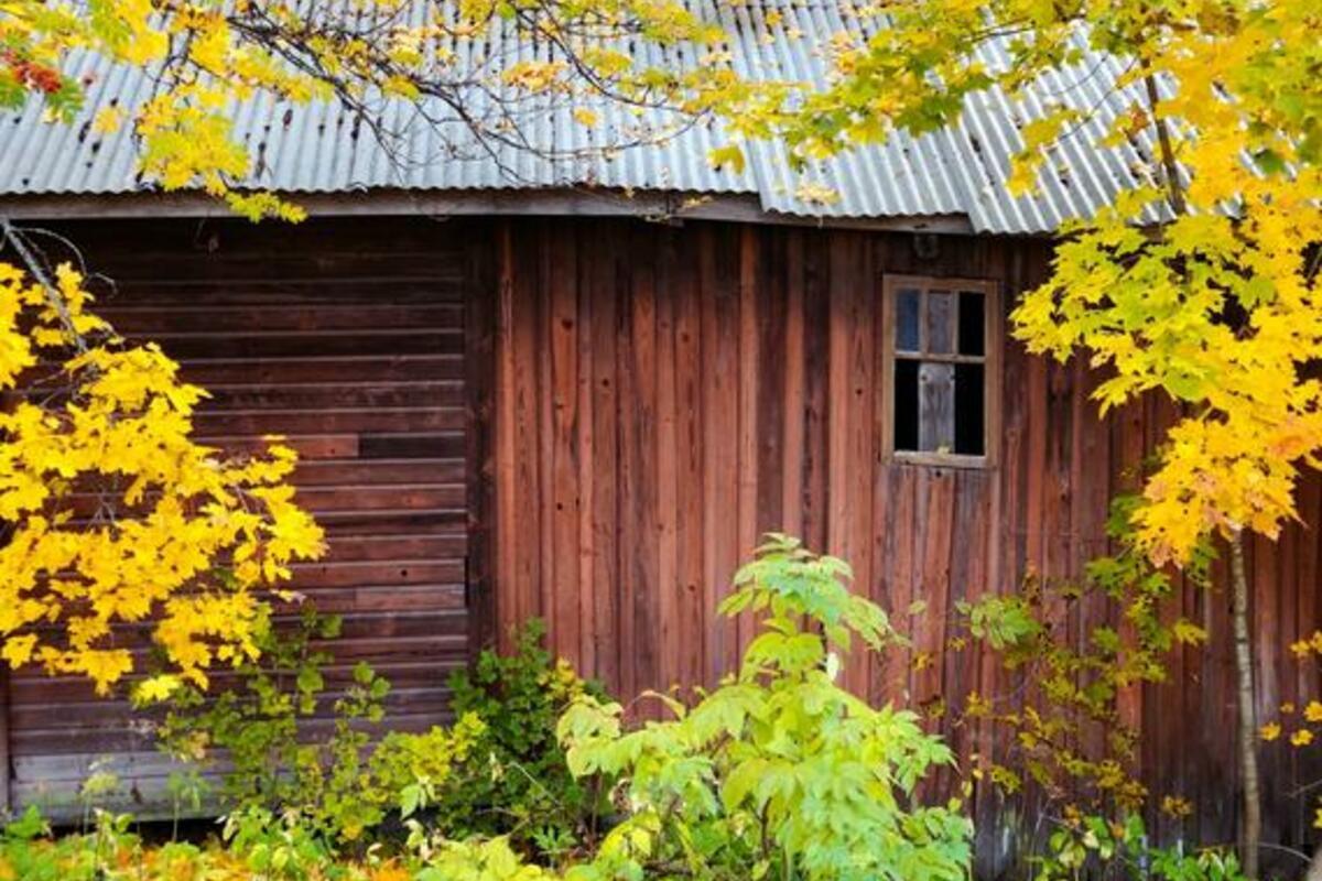 森の中の小屋