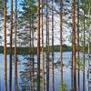 森の民の贅沢とは~フィンランド流自然との付き合い方~